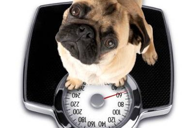 Should My Dog Diet?
